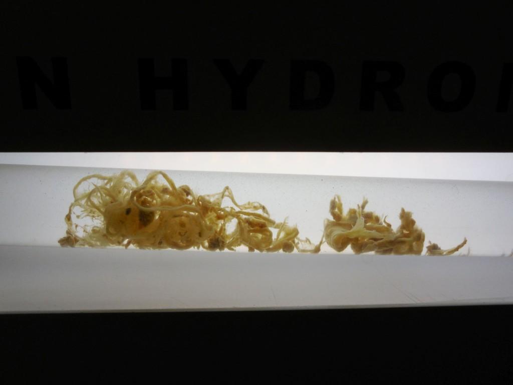 Parazit - hydrocolon